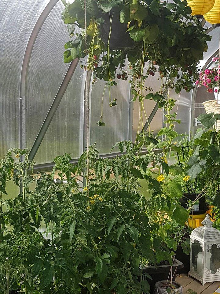 Växthus STANDARD