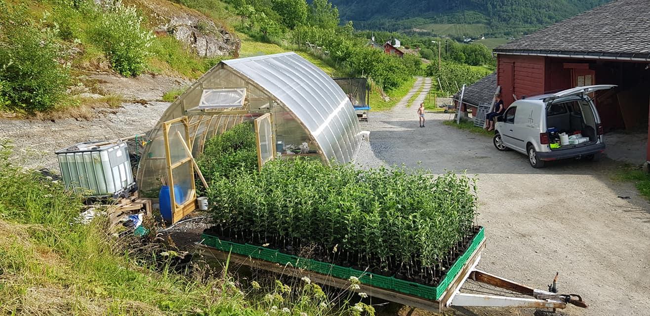 Växthus TRÄ 500 (30m2-100m2)