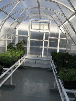 Växthuset Arched Klassisk på toppen av Color Hybrid